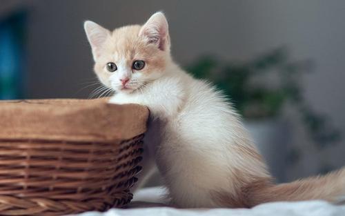 老舍说自己讨厌猫,写作时却把猫放头上,笔下的猫还选入教科书!