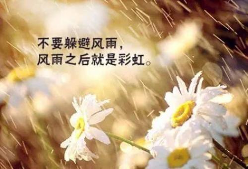 龙应台文学作品摘抄